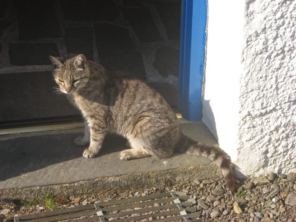 cat on doorstep of stone cottage