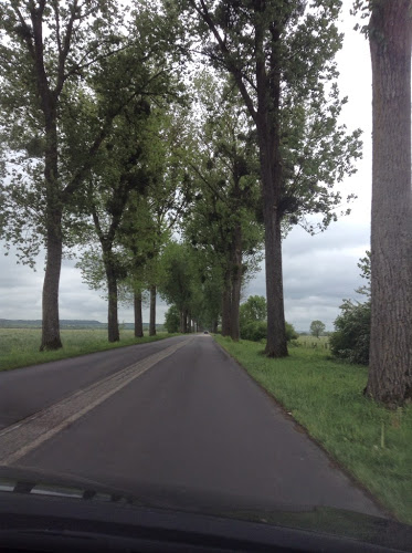 tree-lined road outside of Verdun, France