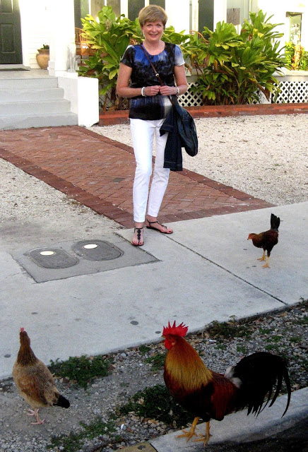 feral chickens in Key West