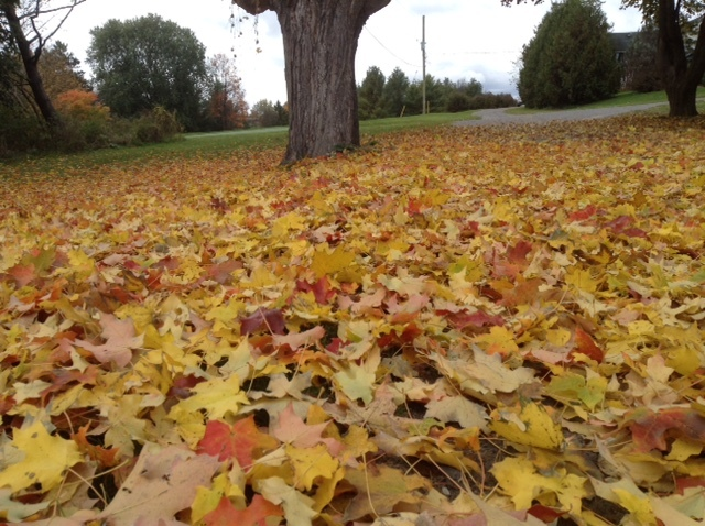fall carpet of leaves