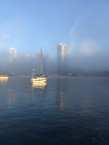foggy morning on Materfamilias Writes