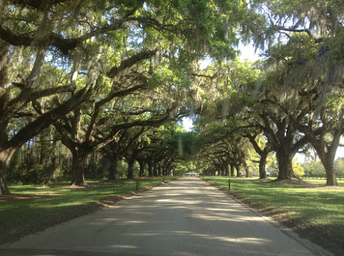 Oak Allee at Boone Hall Plantation