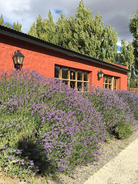 low stucco building with beautiful purple flowering heather bushes