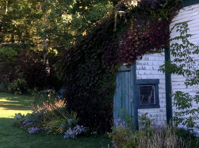 fall colours on the shed of an old farmhouse