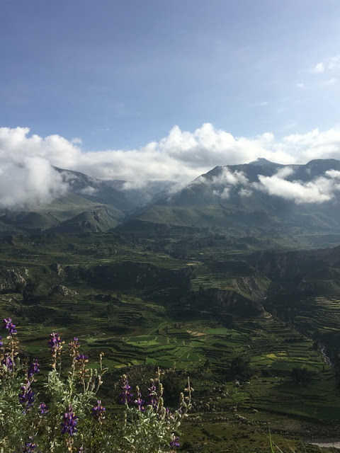 Inca terraces, near Colca Canyon, Peru