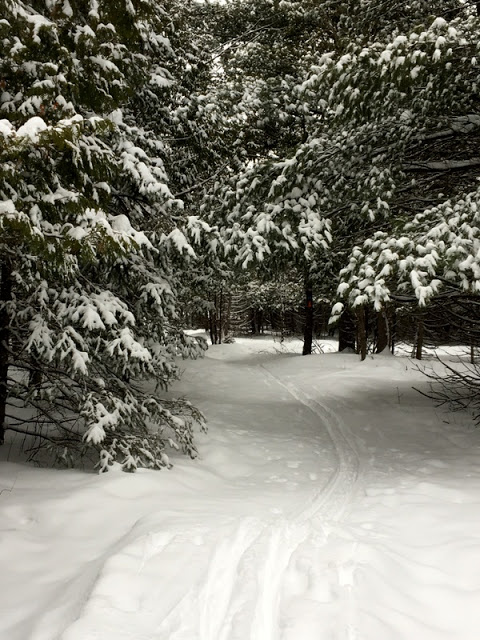 winter ski trails