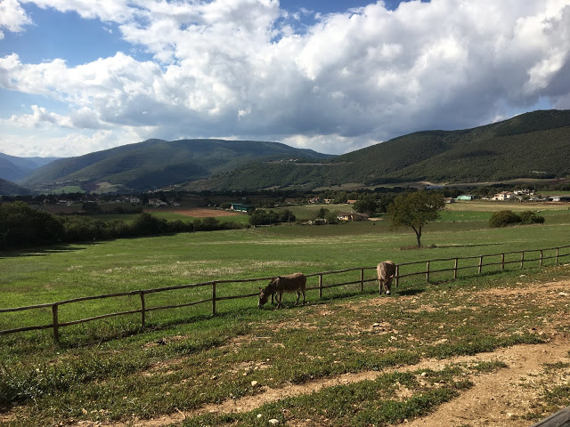 The donkey paddock at a B&B in Norcia, Italy
