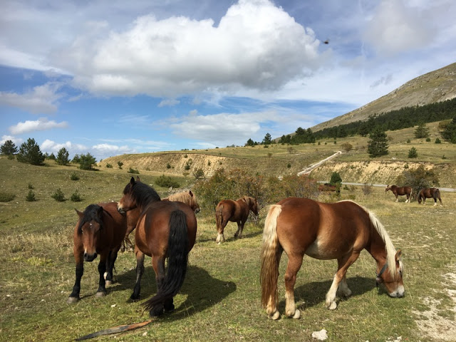 Horses grazing on the Campo Imperatore, in the Gran Sasso d'Italia mountain range, Italy