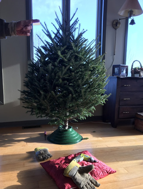 an undecorated Christmas tree